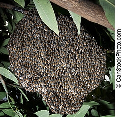 beehive in tree bush