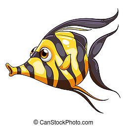 A stripe-colored fish