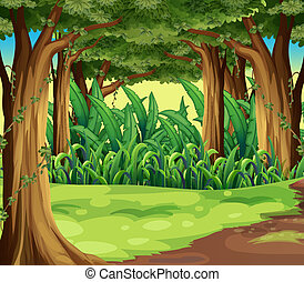 Giant trees in the forest - Illustration of the giant trees...
