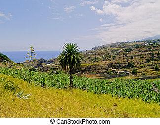 la, Palma, kanarienvogel, Inseln