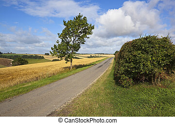 ash tree and country road - a young ash tree by a small...