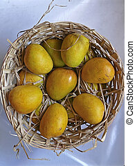 Alphonso mangoes, Mangifera indica L, Anacardiaceae are kept in a basket made of bamboos for packing