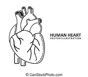 human heart design over white background vector illustration...