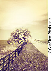 Cross-Processed Oak and Country Road - A fence and old oak...