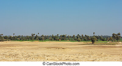 Oasis in Africa