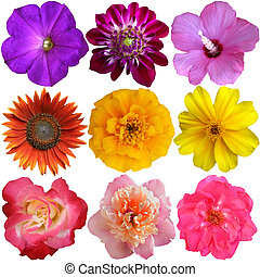 Collection of Flower heads isolated on white background
