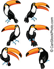 Set of toucans