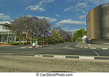 Johannesburg streets at spring with jacaranda blossom