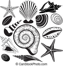 Shells collection. Seashells vector set starfish for design...