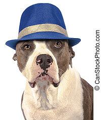 hoedje, amerikaan,  Terrier,  staffordshire