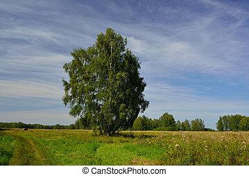 Rural landscape with birch