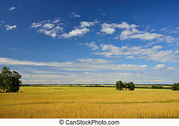 Natural landscape with wheat field