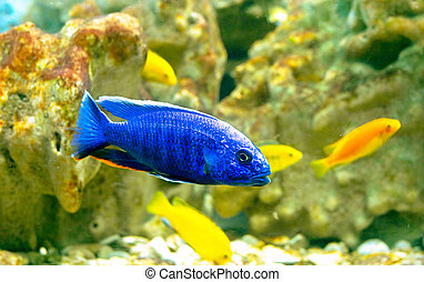 sea fishes - fishes in coral reef