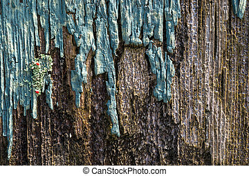 Old rotting wood with peeling paint and lichen