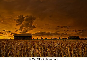 Cornfield in the evening - A nightly atmospheric sky above a...