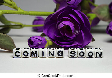 Magenta flower and coming soon message - Coming soon message...
