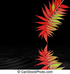 Autumn Rowan Leaf Beauty - Abstract design of a rowan leaf...
