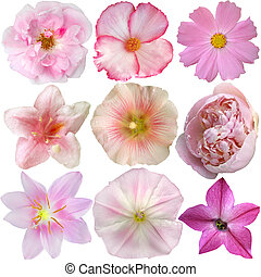 Set of Pink Flowers Isolated on White
