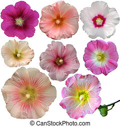 Set of mallow flowers on white background
