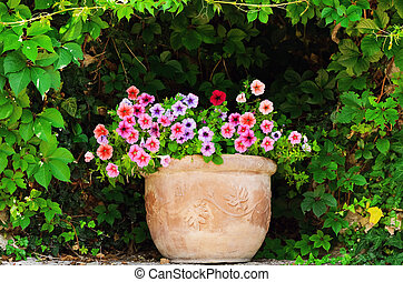 Petunia - Flower Pot With Petunia Flowers Among The Lush...