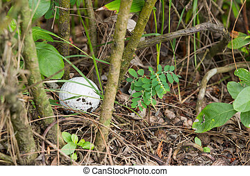 Golf ball in the bush - Close up dirty Golf ball in the bush