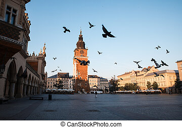 Pigeons in the morning Krakow main market square Poland,...