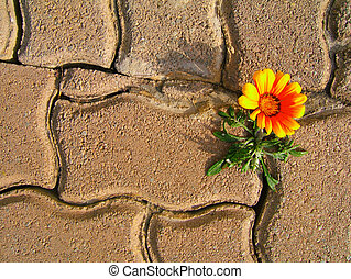 Determination - flower growing through brick paving