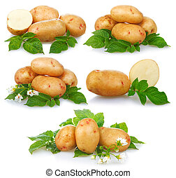 Set of ripe potatoes vegetable with green leafs isolated on...