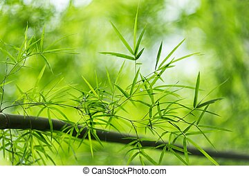 Bamboo leaves - Fresh bamboo leaves in tropical forest