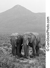 Two elephants landscape - A landscape with two elephants and...