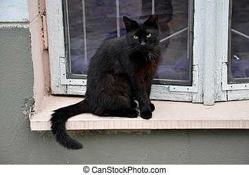Black cat is sitting next to the old window