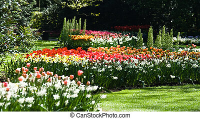 Daffodils and tulips in spring