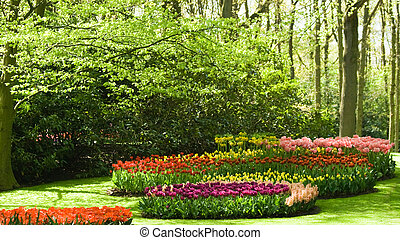 Trees and flowers in spring