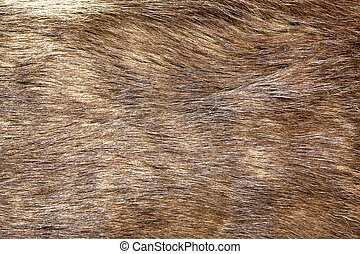 Natural brown fur texture, as background