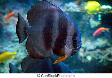 Salt Water Aquarium - salt water aquarium fish photographed...