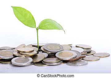 Plant and Coin with finance concept