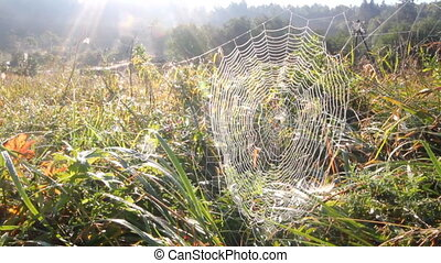 spider web and sun - web and sunrise on a meadow in the...