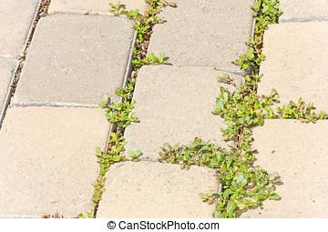 pavimentar, pedras, ervas daninhas