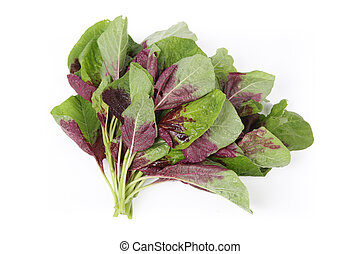 amaranth - healthy vegetable of the amaranth with white...