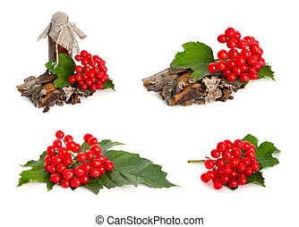 Guelder-rose bark isolated on white background.