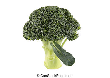 brocoli  - fresh green brocoli with white background