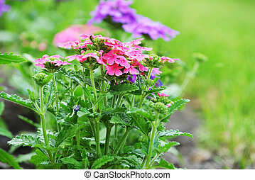 flower bed - beautiful flowers on flower bed in yard