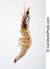 Fresh Shrimp - fresh brown tiger shimp isolated on white...