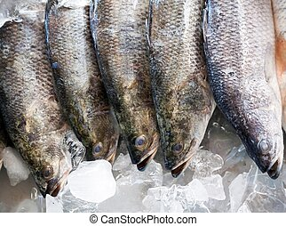 Fresh Seabass chilled on ice, raw seafood.