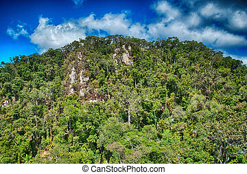 Tropical rain forest from Cairns to Kuranda - Queensland,...