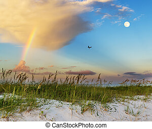 Sunrise beach scene - Sea oats growing on beach with...