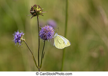 pollination - butterfly on a flower on the summer meadow