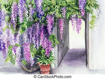 Wisteria blossom - Blossoming wisteria garden against the...