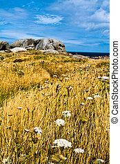 Bretagne landscape - Typical Bretagne landscape with grass,...