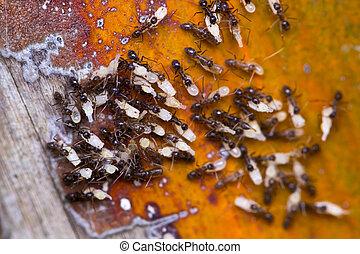 ant & eggs